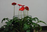 Kvetinové podpery