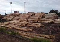 Výkup a predaj dreva